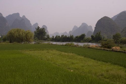 Chao Long Rice Paddies