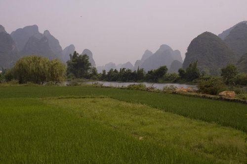 Chao Long Rice Paddies
