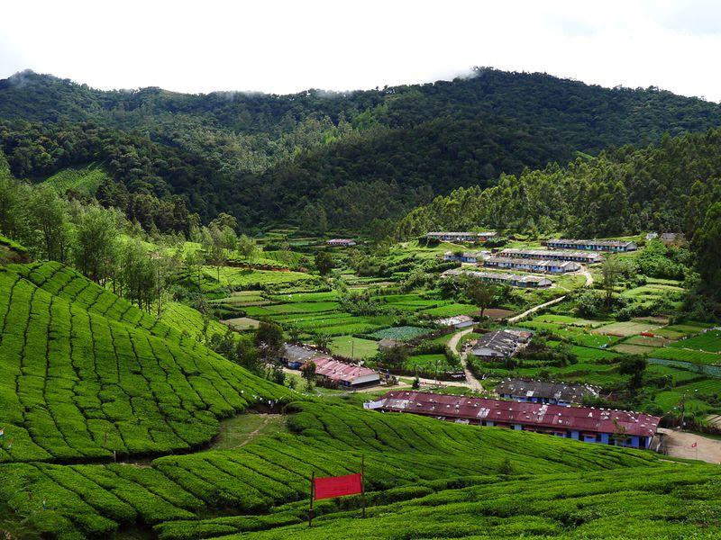 The tea plantations of Munnar